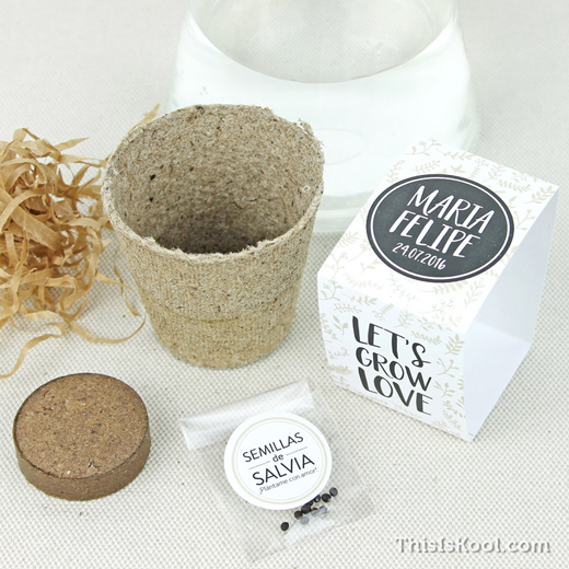 kits de semillas para regalo