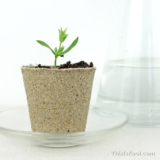 KIT-Semillas-Detalle-Boda-Cultivo-Planta-7
