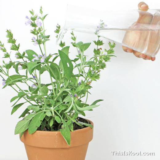 KIT-Semillas-Detalle-Boda-Cultivo-Planta-8