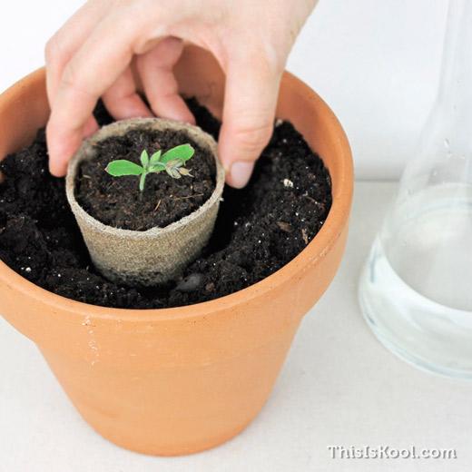 KIT-Semillas-Detalle-Boda-Cultivo-Planta-9